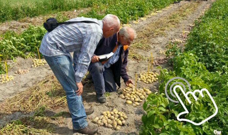 χωράφι και καλλιέργεια ελιάς