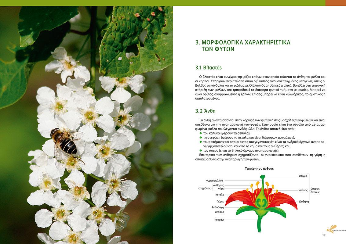 Μελισσοκομικά φυτά και μελισσοβοσκές