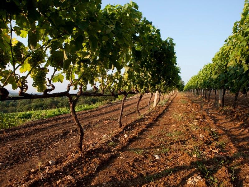 λιπάσματα έδαφος και καλλιέργεια φιστικιας