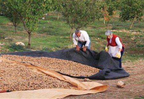 έδαφος και καλλιέργεια καρυδιάς