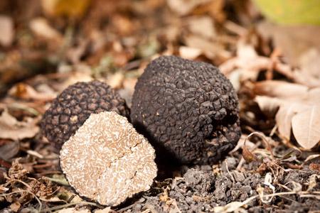 Έδαφος και μαύρη τρούφα