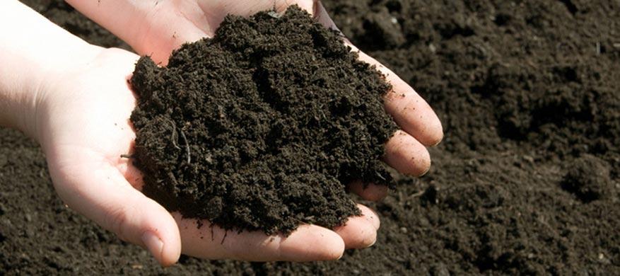 έδαφος και καλλιέργεια φουντουκιάς